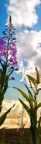 mt blomst besk
